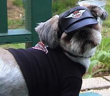 Biker Dog - Shih Tzu in biker hat and t-shirt